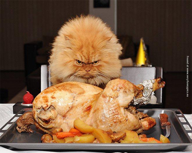 pets-craving-food-04