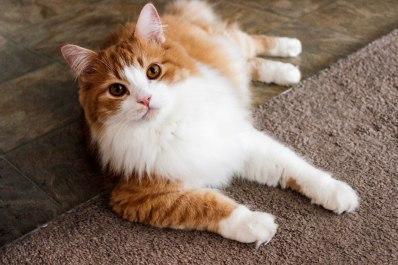 cats-13