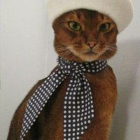 Cool Cat: Elaine Stritch?