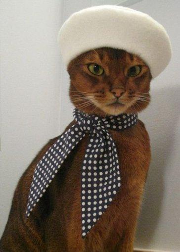 cat-images-fashion-cat-hilarious